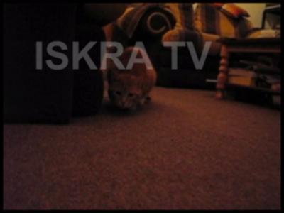 Cat pounce