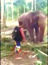 Elephant Smack