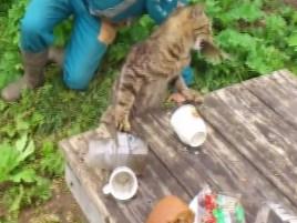 Cat Nabbed