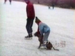 kid falls, pulled by dog across the ice