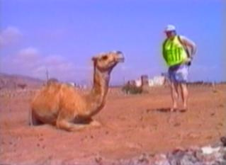 camel bites tourist's hand