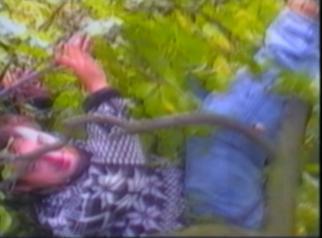man falls off a tree