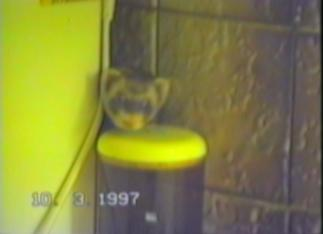 ferret steals a bread roll and takes it behind a fridge