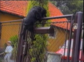 dog climbs over a gate