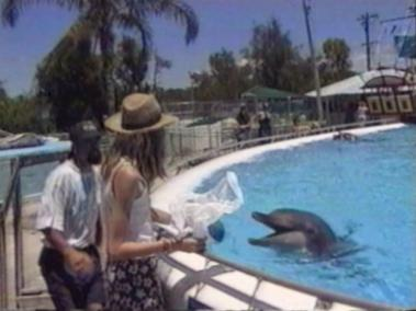 Dolphin tries to steal a plastic bag
