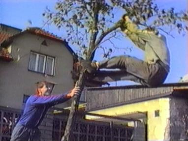 Man falls off a tree