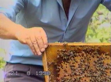 Bee careful bee keeper