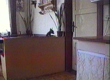 Small dog opening door