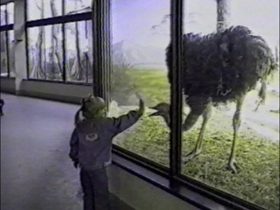 Girl at zoo – attracts ostrich