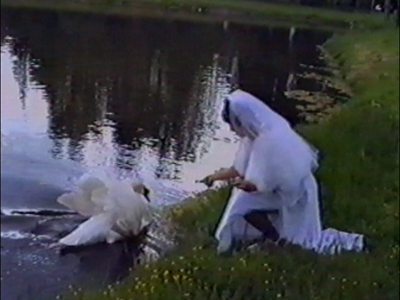 Swan attacks bride