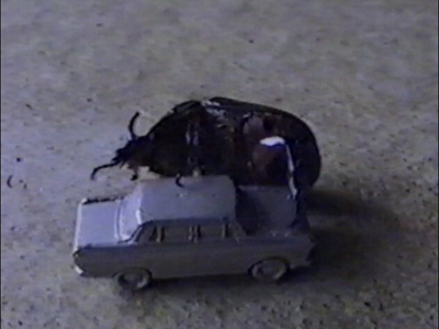Beetle on top of toy car