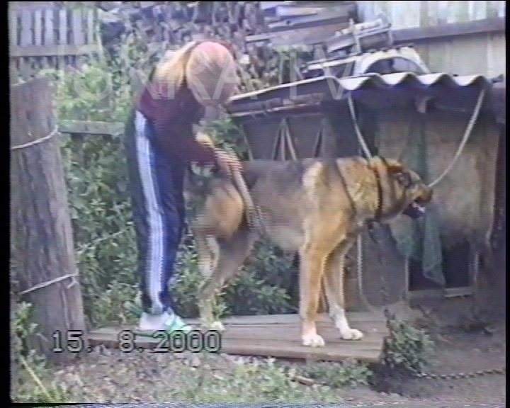 girl scratching a dog with a brush