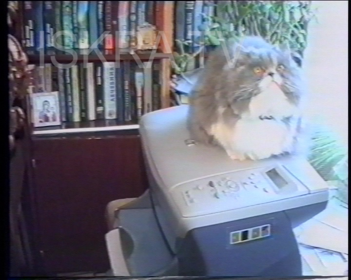 cat entertained by a computer printer