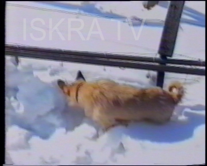 dog digging in snow to get under fence