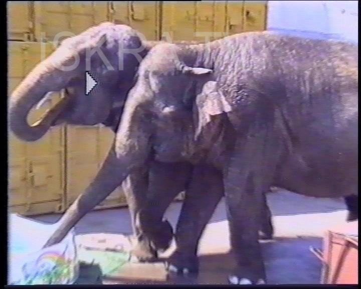 elephants and kids share paddling pool