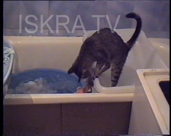 cat taking washing out of bathtub