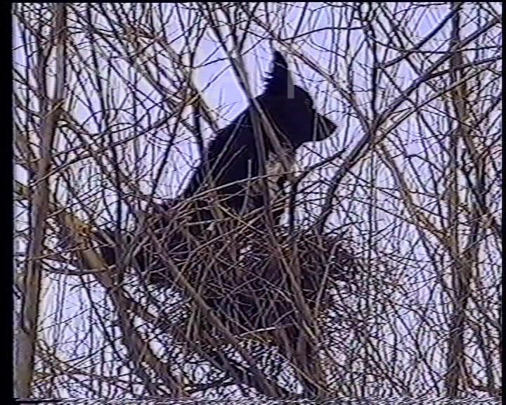 a dog up a tree in a bird's nest