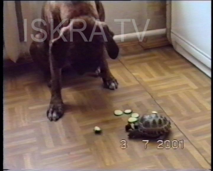 dog and tortoise eat together