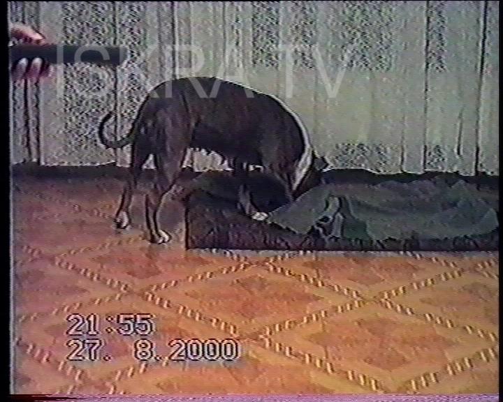 dog goes under blanket