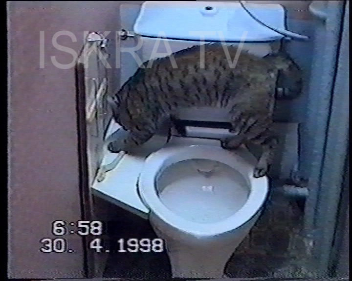 Cat repeatedly flushing toilet