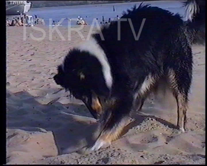 dog digging in the sand at a beach