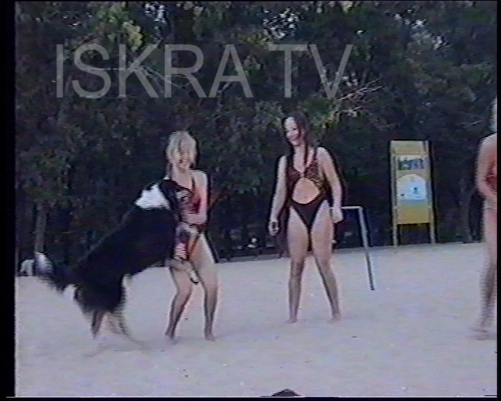 dog doing tricks at a beach