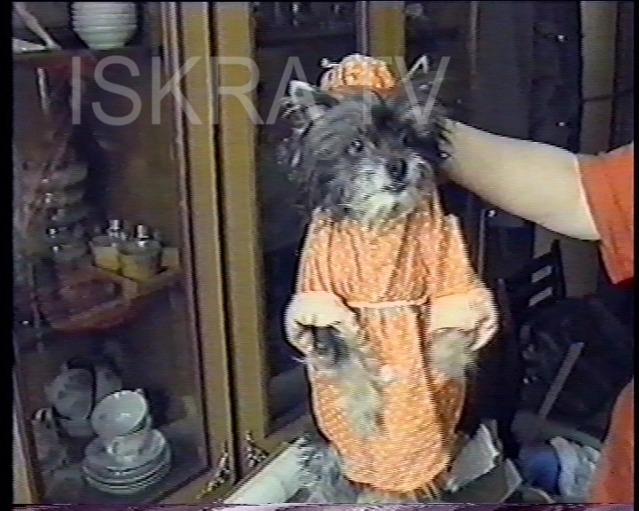 dog in a little bathrobe