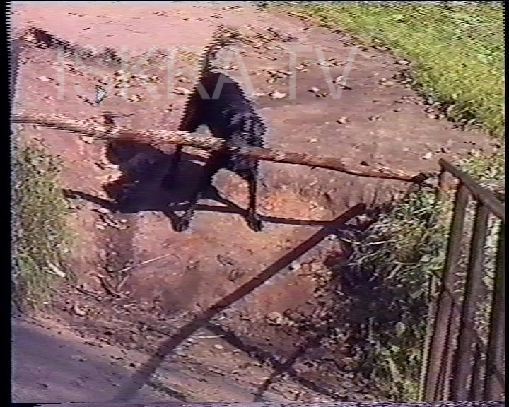 dog with a large stick gets stuck