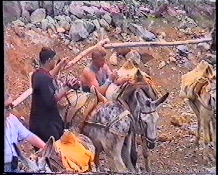 man tries to mount a donkey and falls