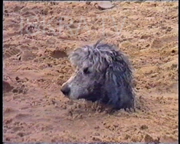 dog buried in sand up to its neck