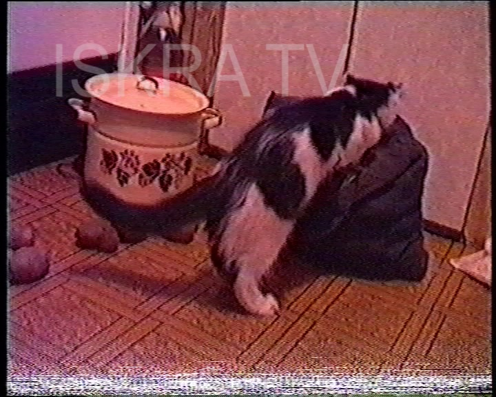 cat taking potatoes out of a bag