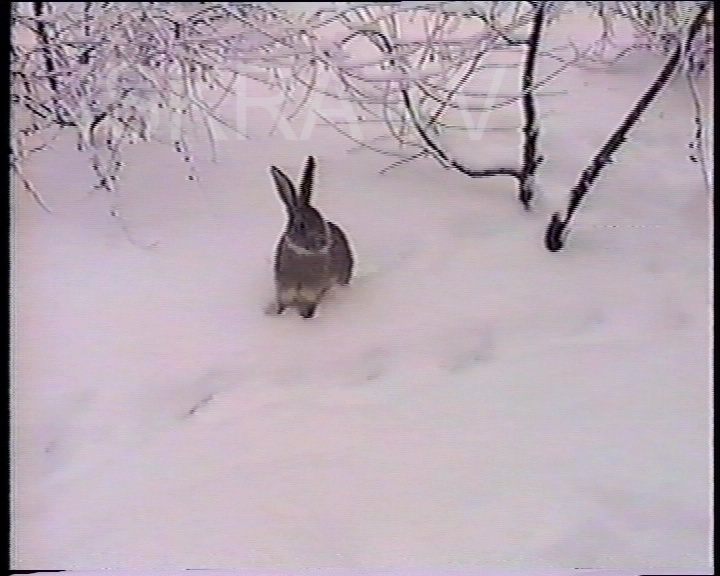 small child and a rabbit in deep snow