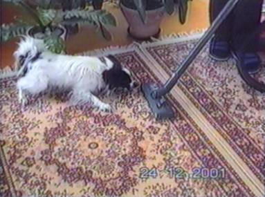 Dog barking at Hoover angrily