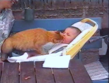 Cat stealing food from baby's mouth