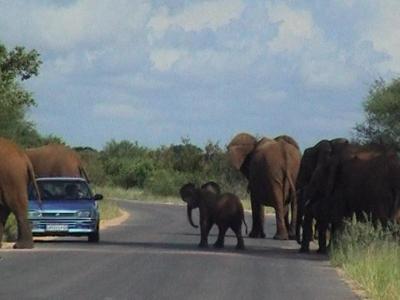 Elephants holding up traffic