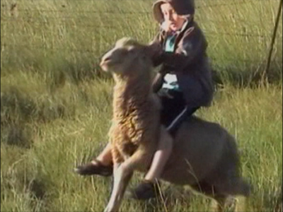 A boy climbs on a sheep – drops him off