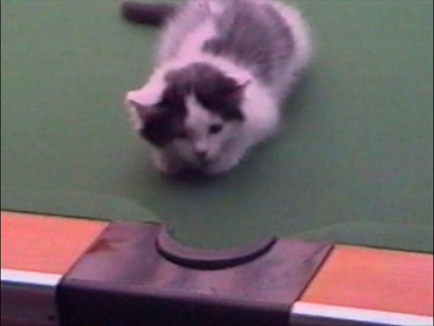 Cats play on a pool table
