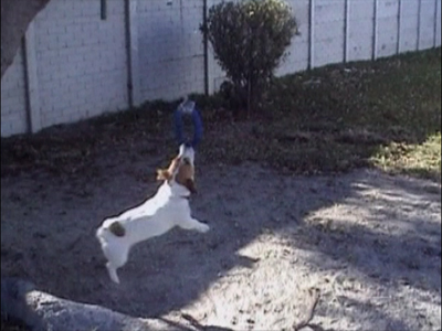Dog swings on a rope