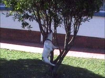 Dog swings on branch