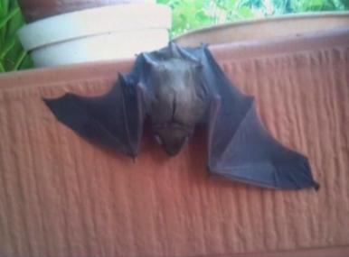 woman frightened by a bat