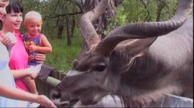 eland hits a baby with antlers