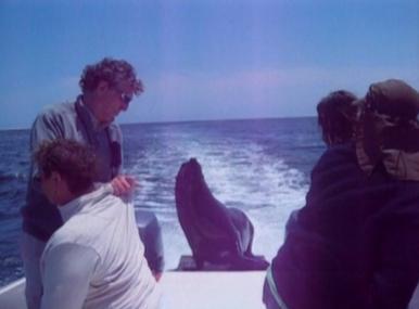 seal hitching speedboat ride