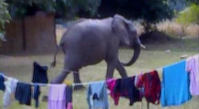 elephant doing the laundry