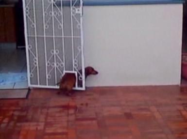 dog stuck in cat flap