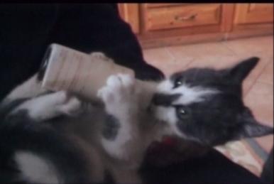 kitten drinking from bottle