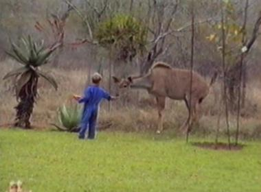 boy feeding antelope gets frightened
