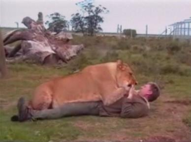 man wrestles with lioness