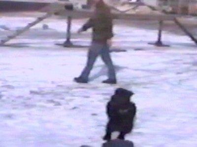 Dog guarding bag in snow