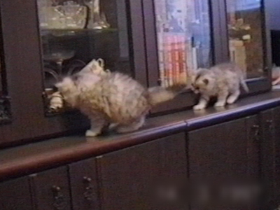 Kittens falling off cupboard