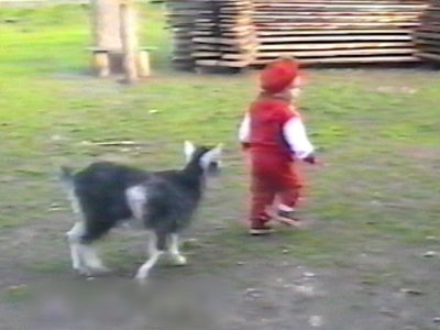 Baby goat knocking small baby over